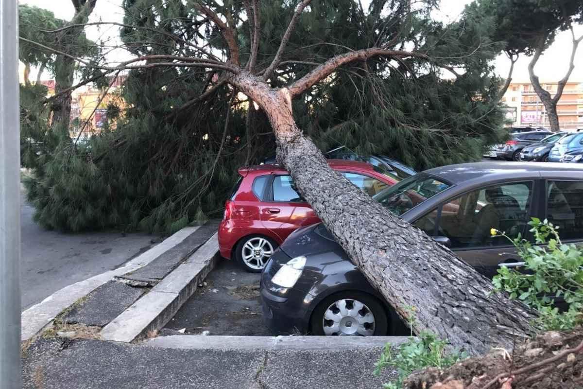 Roma. Per l'onorevole Rampelli gli alberi fascisti non vanno abbattuti
