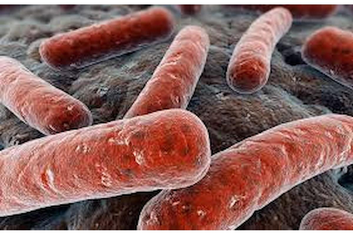 Sconfiggeremo per sempre la tubercolosi?