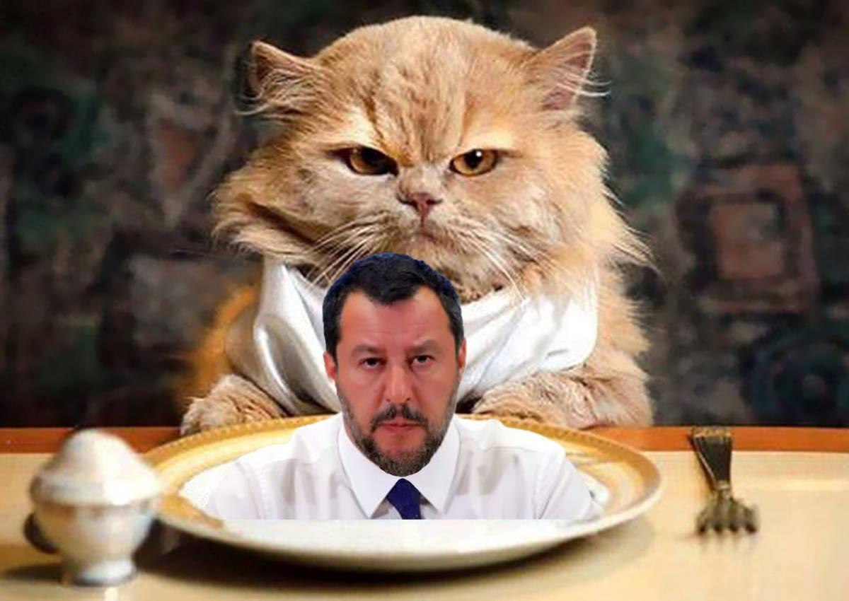 E adesso Salvini ha arruolato i gattini per mangiarsi le sardine
