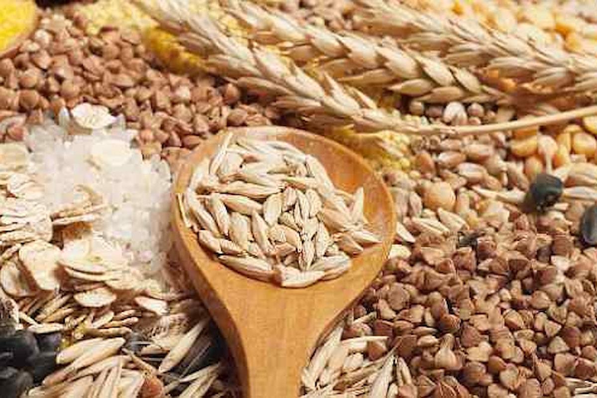 Mercato del grano, sotto pressione la sua quotazione