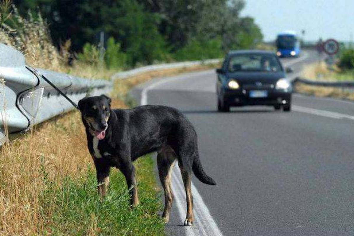 Estate, la strage dei cani