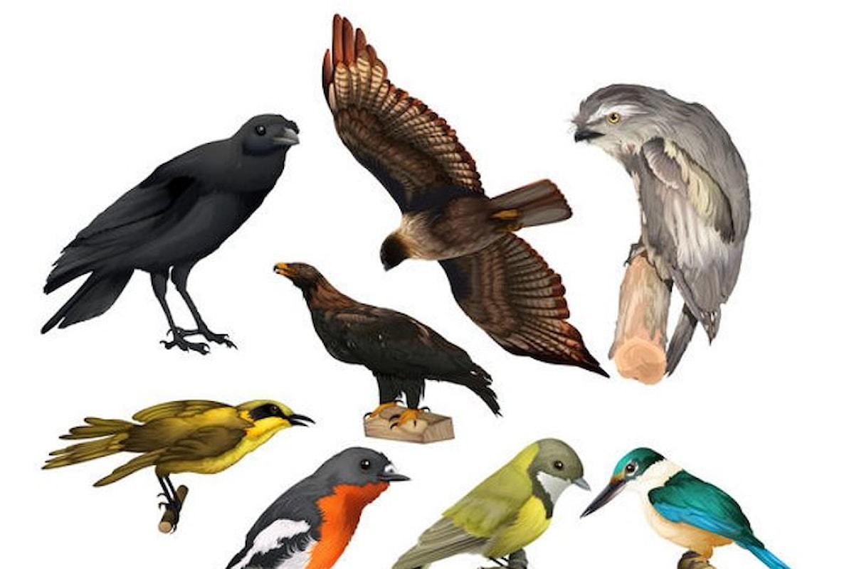 Passione Ornitologia
