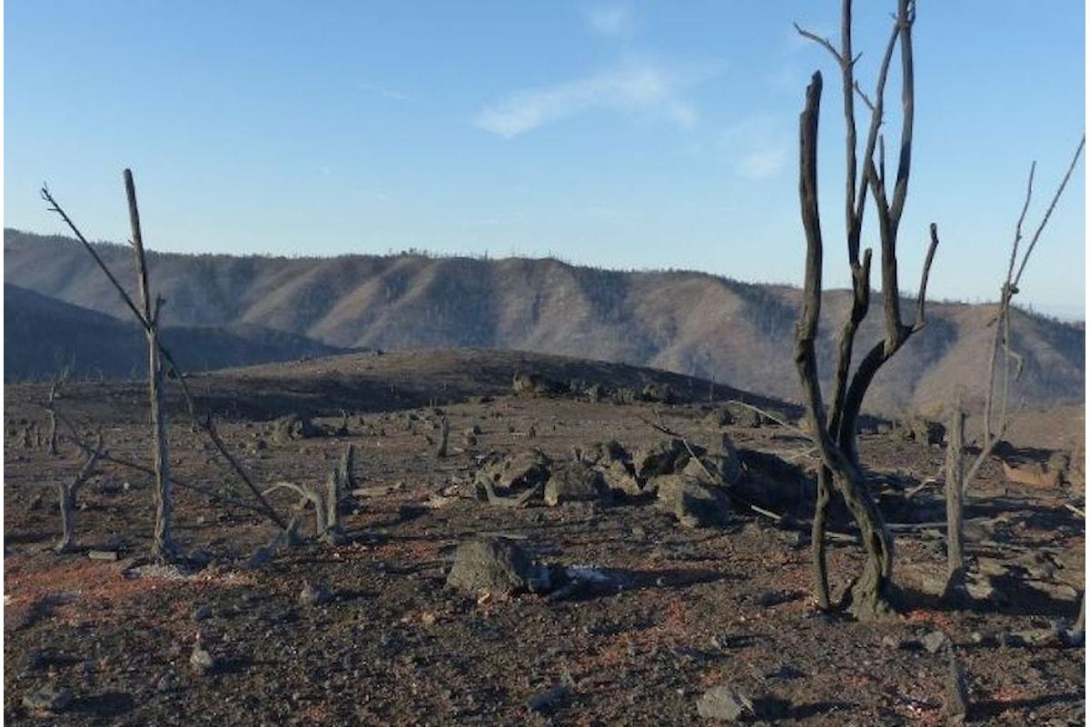 42 le vittime finora accertate di Camp Fire, l'incendio che ha devastato la contea di Butte nel nord della California