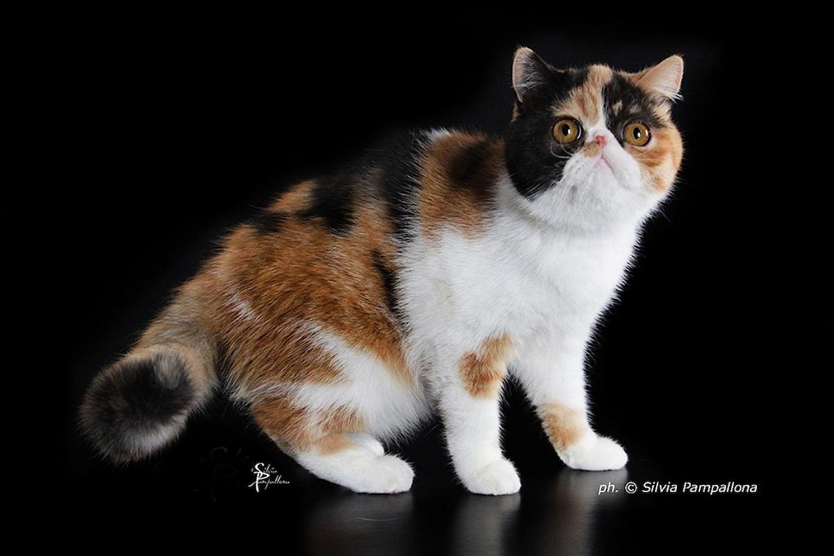 Un gatto per amico Halloween Edition a Pisa dal 28 al 29 ottobre
