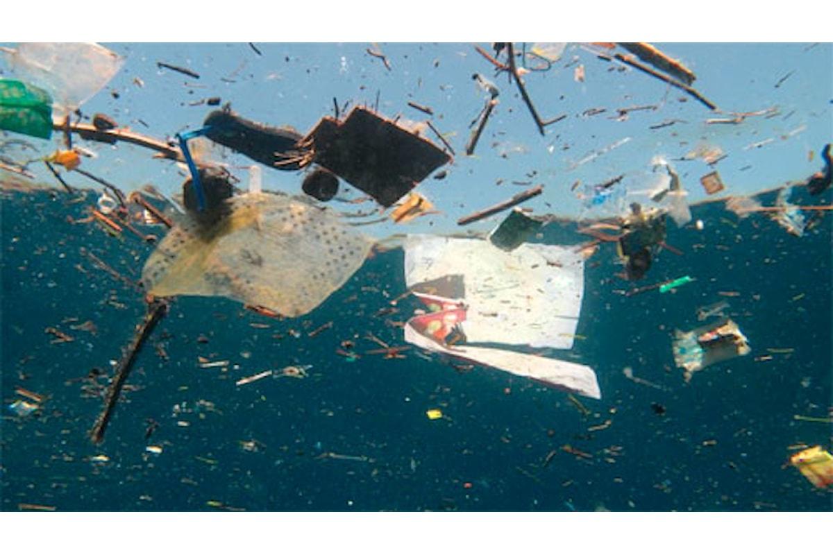 Mediterraneo, emergenza plastica: caretta caretta a rischio estinzione