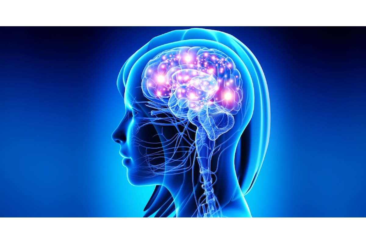 Il carattere dipende dalla conformazione del cervello