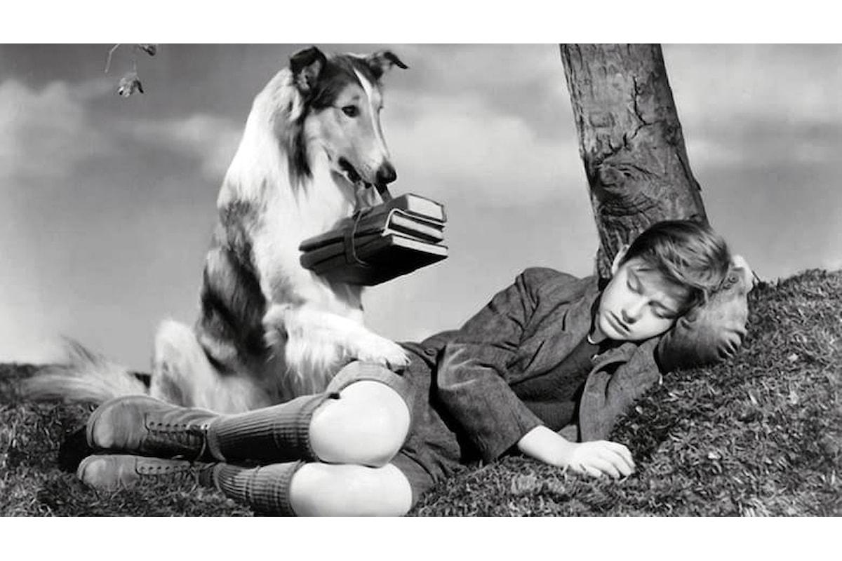 Torna a casa… Lassie