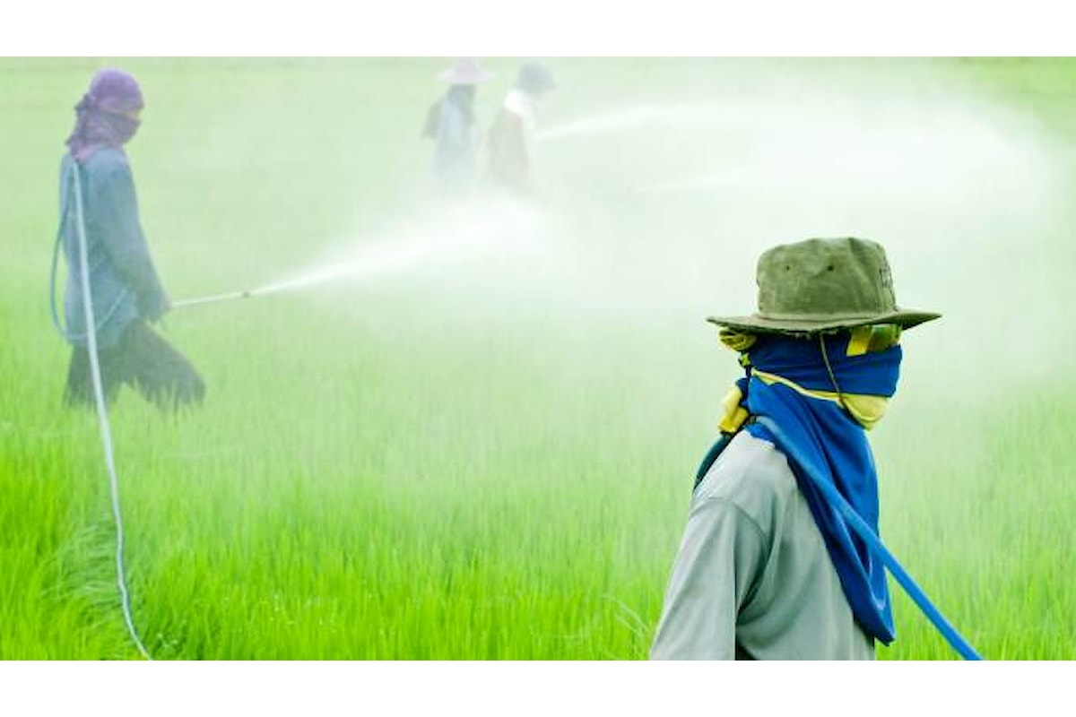 Confermata la trattativa per l'acquisto di Monsanto da parte di Bayer