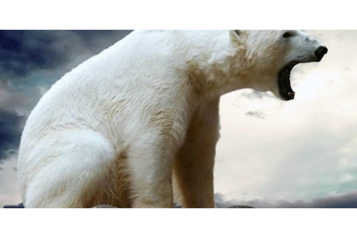 Le 5 specie animali più pericolose