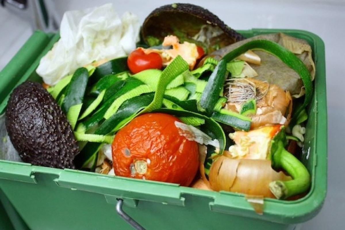 Adoc: ogni anno gettiamo 265 euro di alimenti nella spazzatura