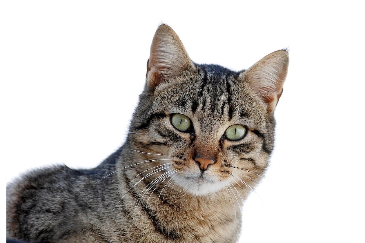 I gatti possono fare i dispetti